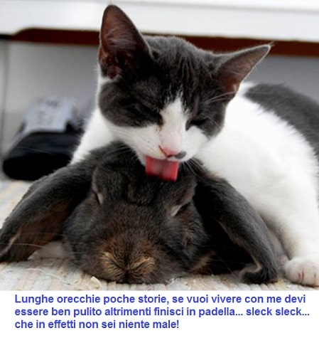 BAU and MIAO - Pagina 15 Miao16