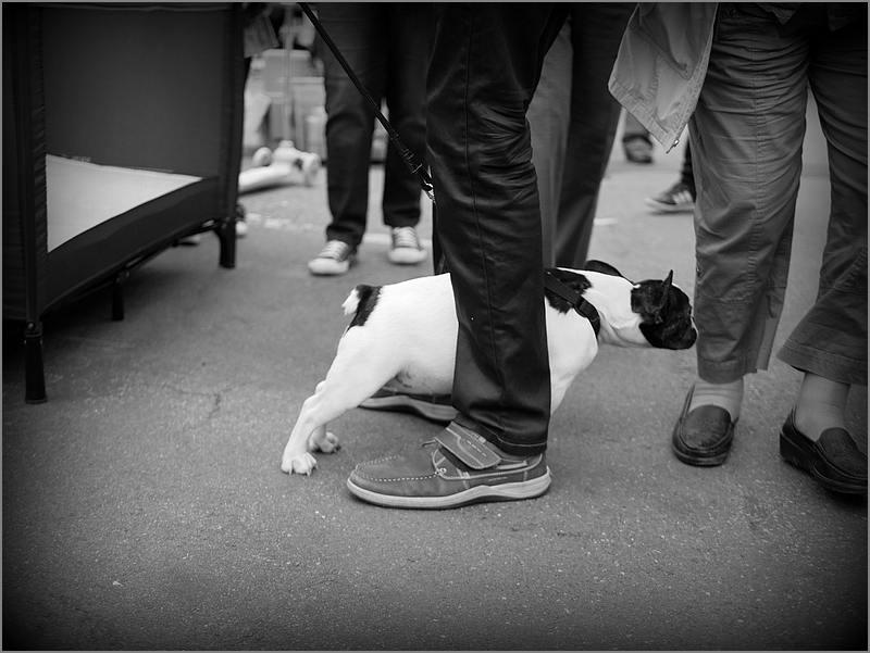 Des chiens au vide-grenier P1010511