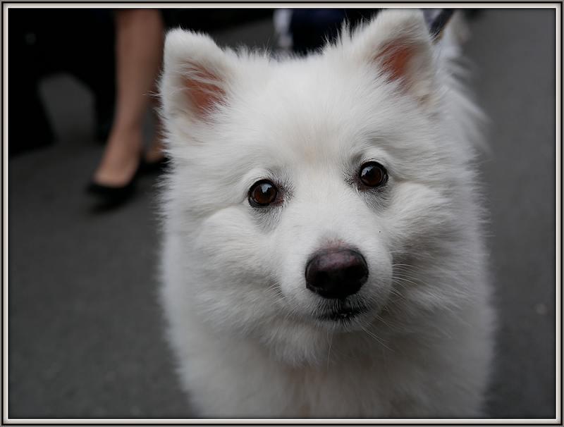 Des chiens au vide-grenier P1010512