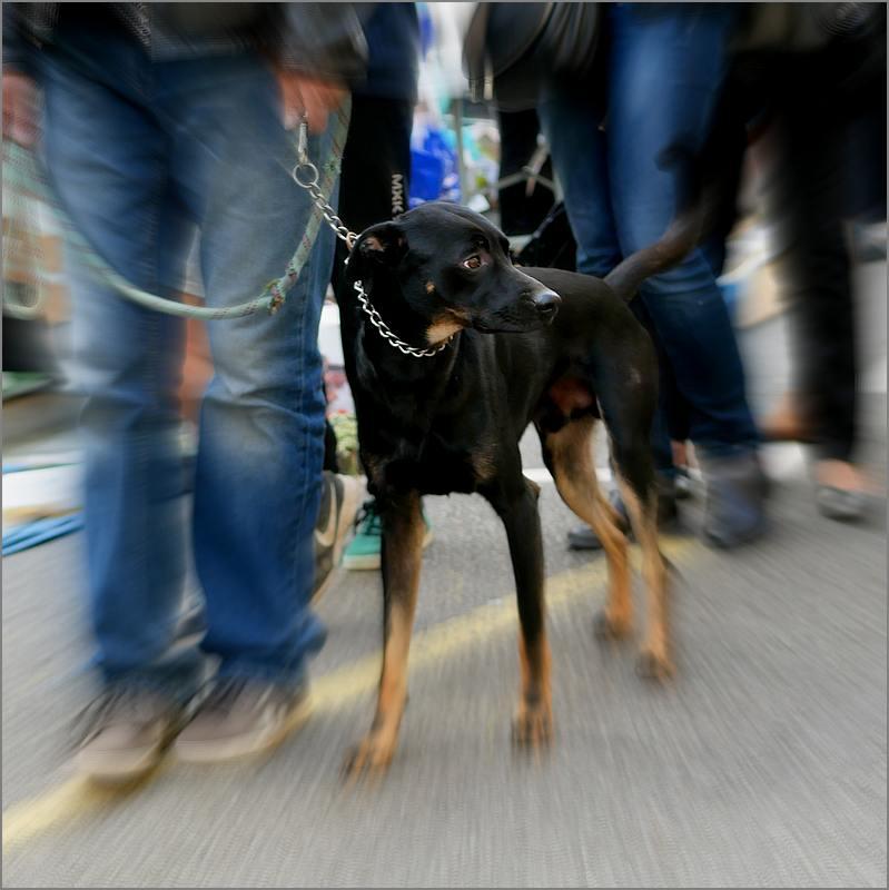 Des chiens au vide-grenier P1010513