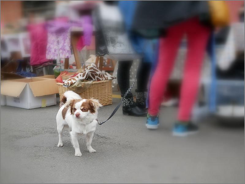 Des chiens au vide-grenier P1010514