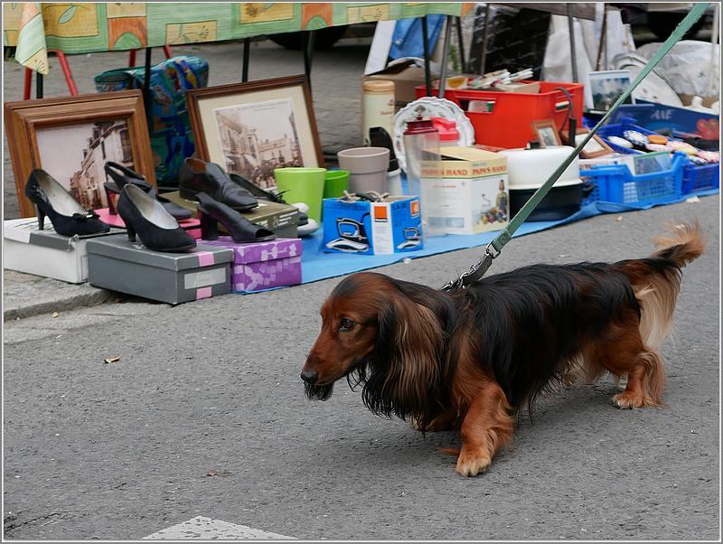 Des chiens au vide-grenier P1010515