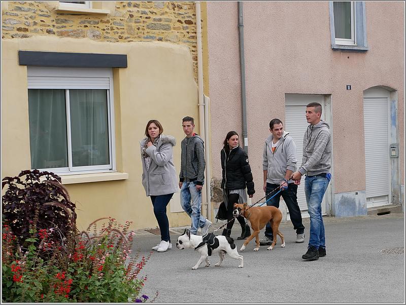 Des chiens au vide-grenier P1010518