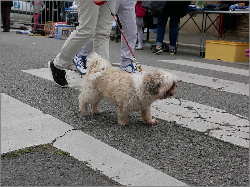 Des chiens au vide-grenier P1010519