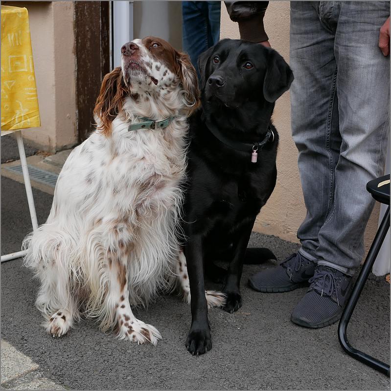 Des chiens au vide-grenier P1010521