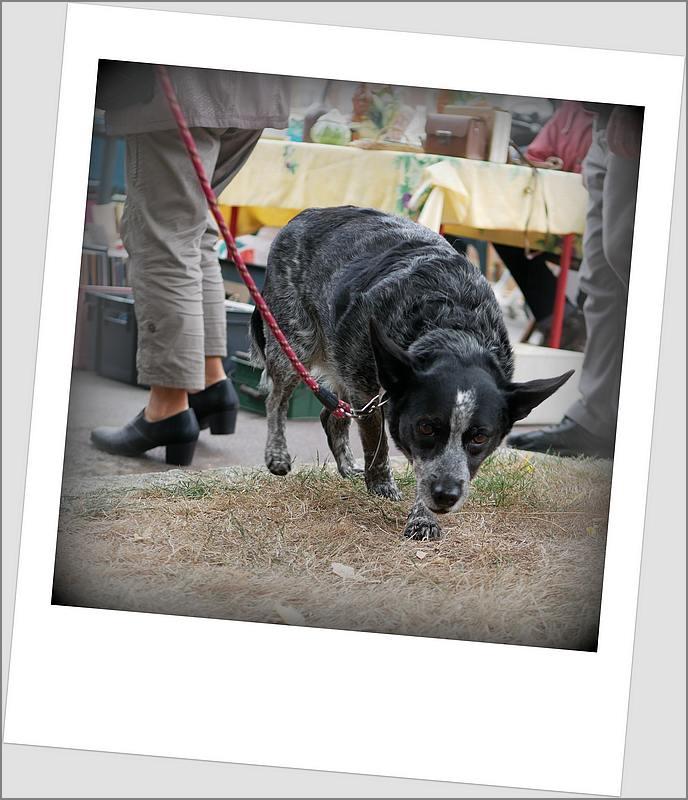 Des chiens au vide-grenier P1010523