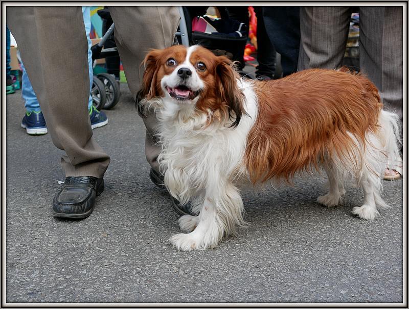 Des chiens au vide-grenier P1010525