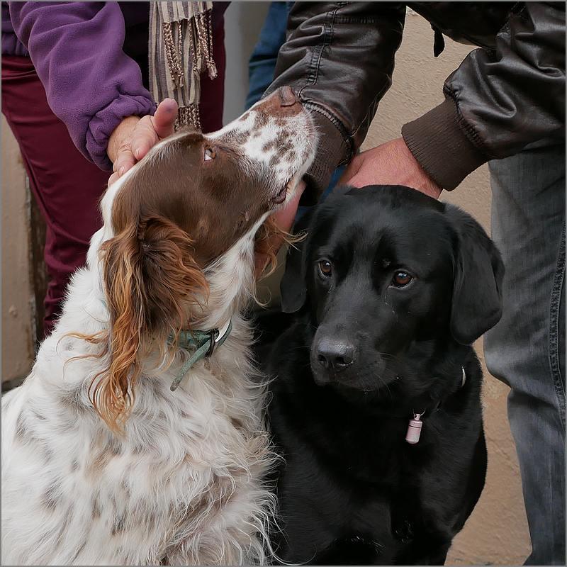 Des chiens au vide-grenier P1010527