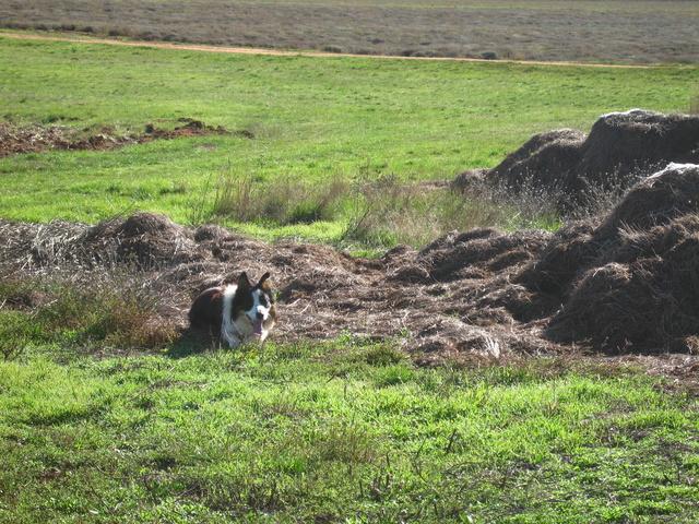 chien - présentation de JUSS, chien traumatisé  - Page 14 Img_0715