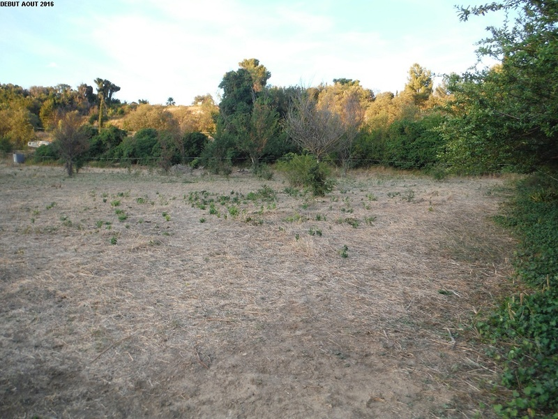 JdB de 4 hectares de pâtures dans le SUD : Timide reprise après 8 mois de sécheresse 10000p10