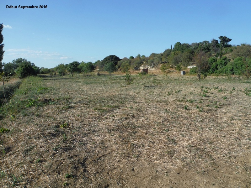 JdB de 4 hectares de pâtures dans le SUD : Timide reprise après 8 mois de sécheresse 10001p10
