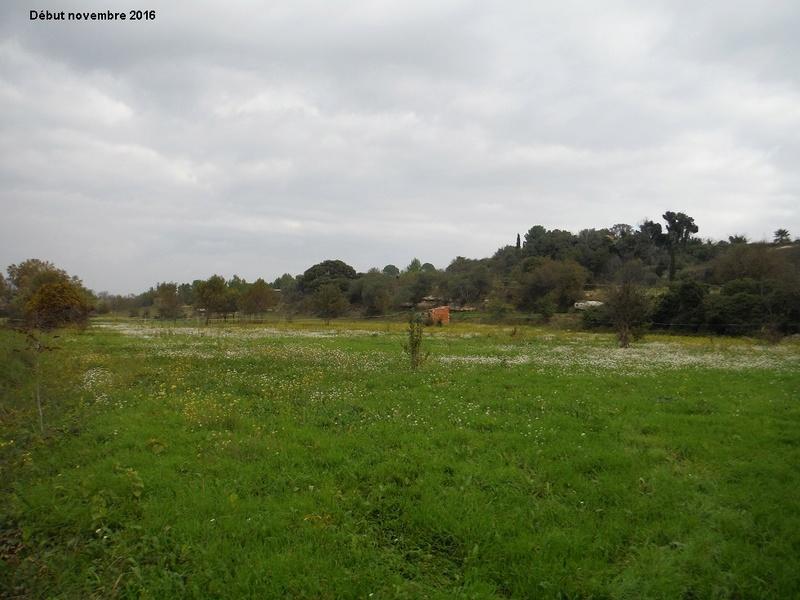 JdB de 4 hectares de pâtures dans le SUD : Janvier à la diète... + expérimentation 10004p10
