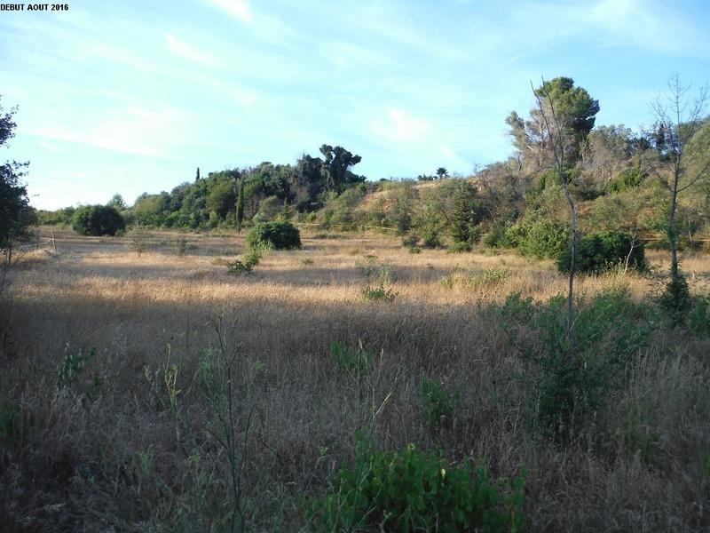 JdB de 4 hectares de pâtures dans le SUD : Janvier à la diète... + expérimentation 1000pa10