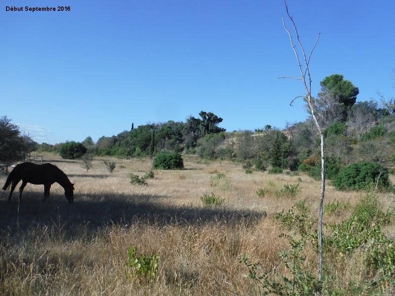 JdB de 4 hectares de pâtures dans le SUD : Janvier à la diète... + expérimentation 1001pa10