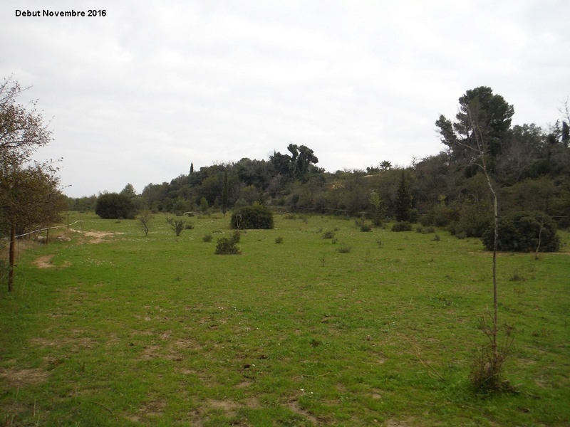 JdB de 4 hectares de pâtures dans le SUD : Janvier à la diète... + expérimentation 1004pa10