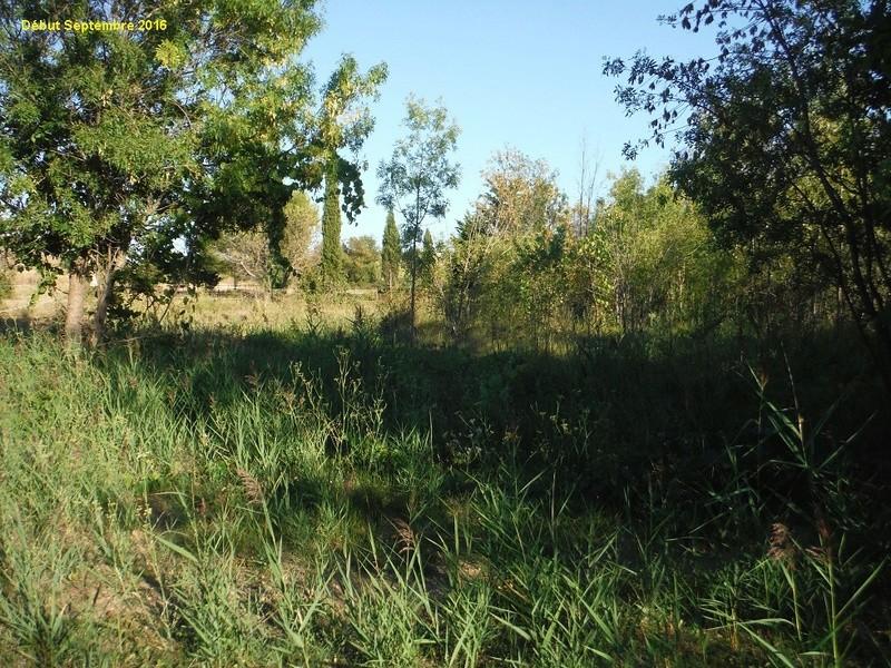 JdB de 4 hectares de pâtures dans le SUD : Avril 2019, et toujours la sécheresse... - Page 2 12001p10