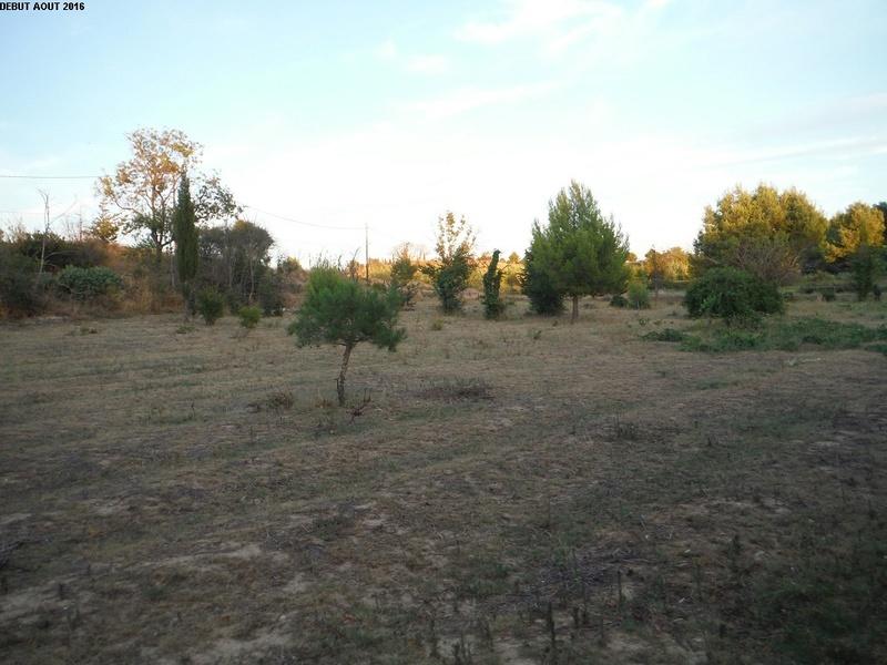 JdB de 4 hectares de pâtures dans le SUD : Avril 2019, et toujours la sécheresse... - Page 2 14000p10