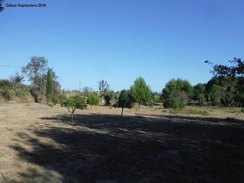 JdB de 4 hectares de pâtures dans le SUD : Avril 2019, et toujours la sécheresse... - Page 2 14001p10