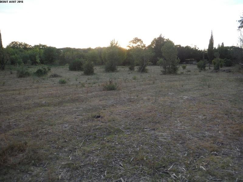 JdB de 4 hectares de pâtures dans le SUD : Avril 2019, et toujours la sécheresse... - Page 2 15000p10