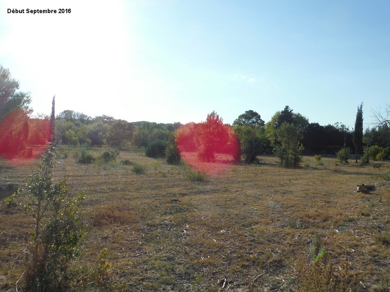 JdB de 4 hectares de pâtures dans le SUD : Avril 2019, et toujours la sécheresse... - Page 2 15001p10