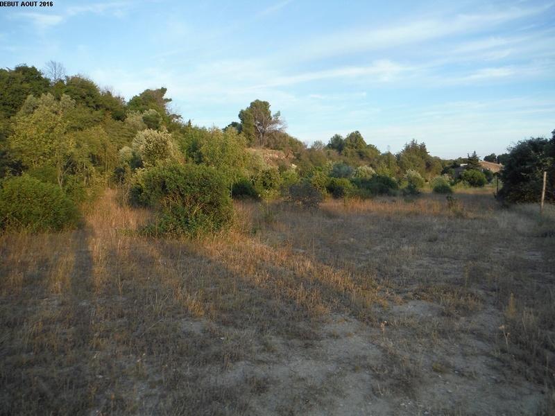 JdB de 4 hectares de pâtures dans le SUD : Timide reprise après 8 mois de sécheresse 2000pa10