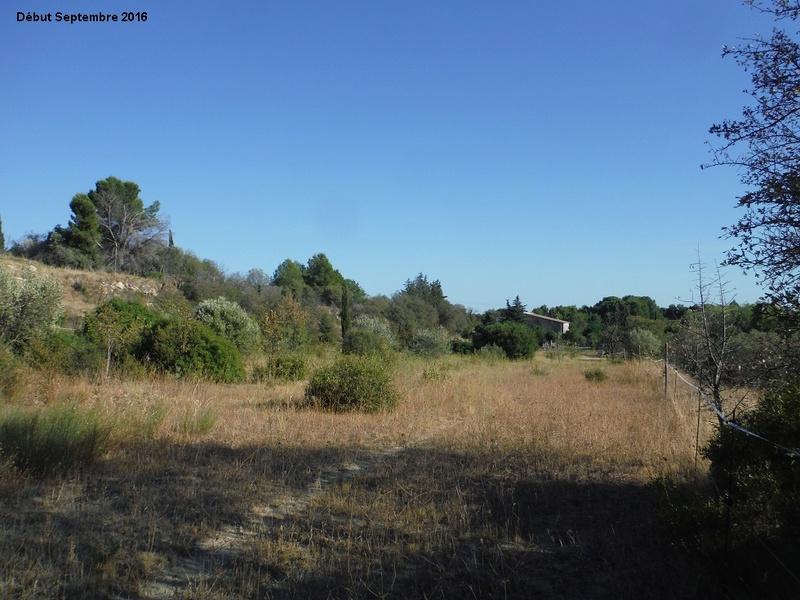 JdB de 4 hectares de pâtures dans le SUD : Janvier à la diète... + expérimentation 2001pa10