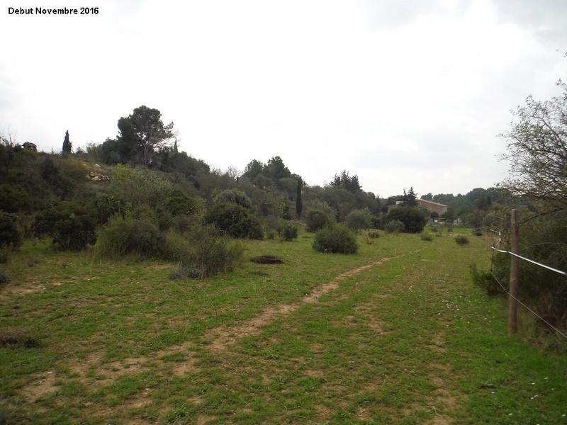 JdB de 4 hectares de pâtures dans le SUD : Janvier à la diète... + expérimentation 2004pa10