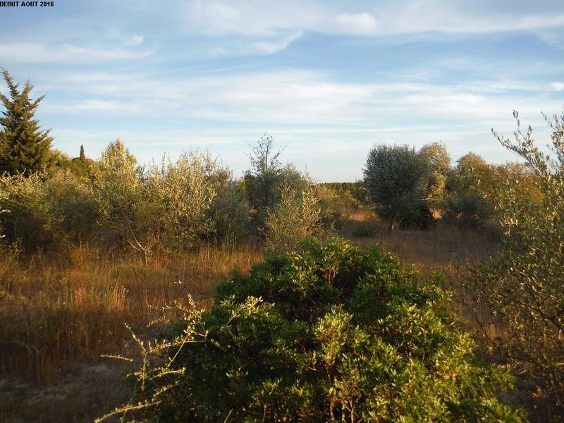 JdB de 4 hectares de pâtures dans le SUD : Janvier à la diète... + expérimentation 3000pa10