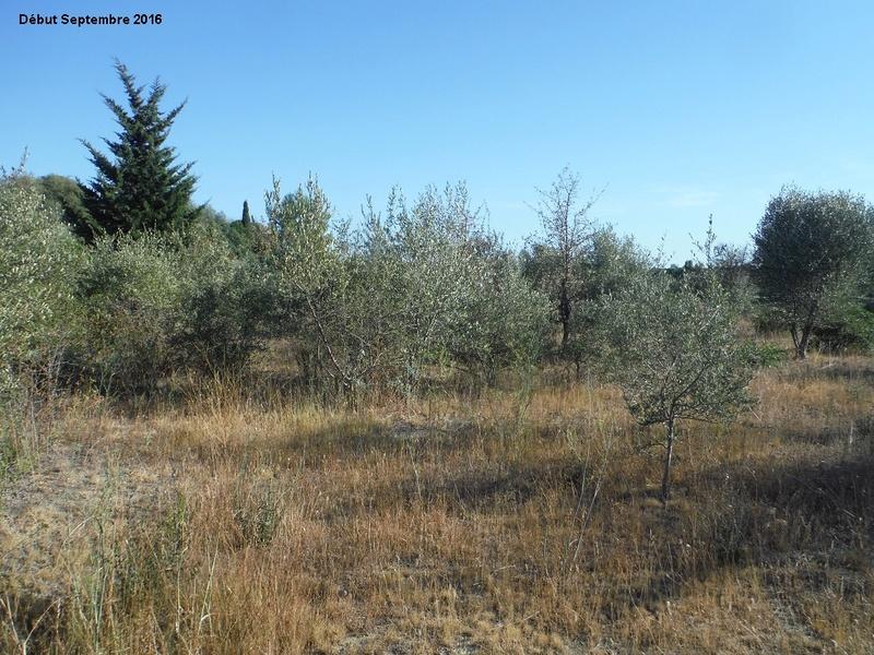 JdB de 4 hectares de pâtures dans le SUD : Janvier à la diète... + expérimentation 3001pa10