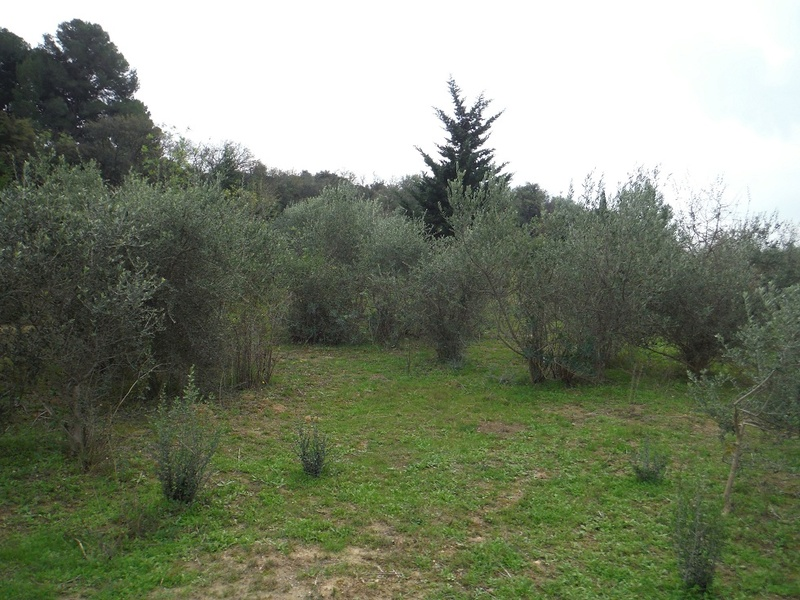 JdB de 4 hectares de pâtures dans le SUD : Janvier à la diète... + expérimentation 3004pa10