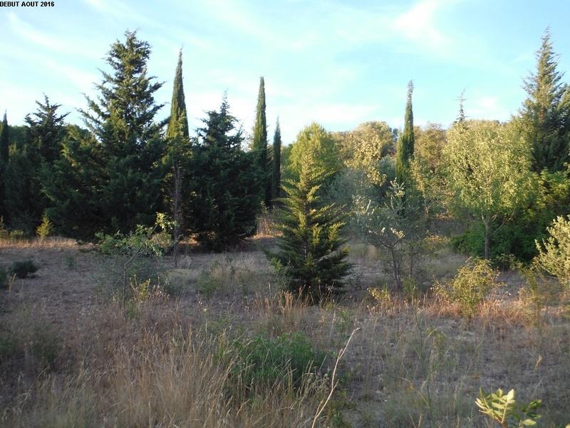 JdB de 4 hectares de pâtures dans le SUD : Timide reprise après 8 mois de sécheresse 4000pa10