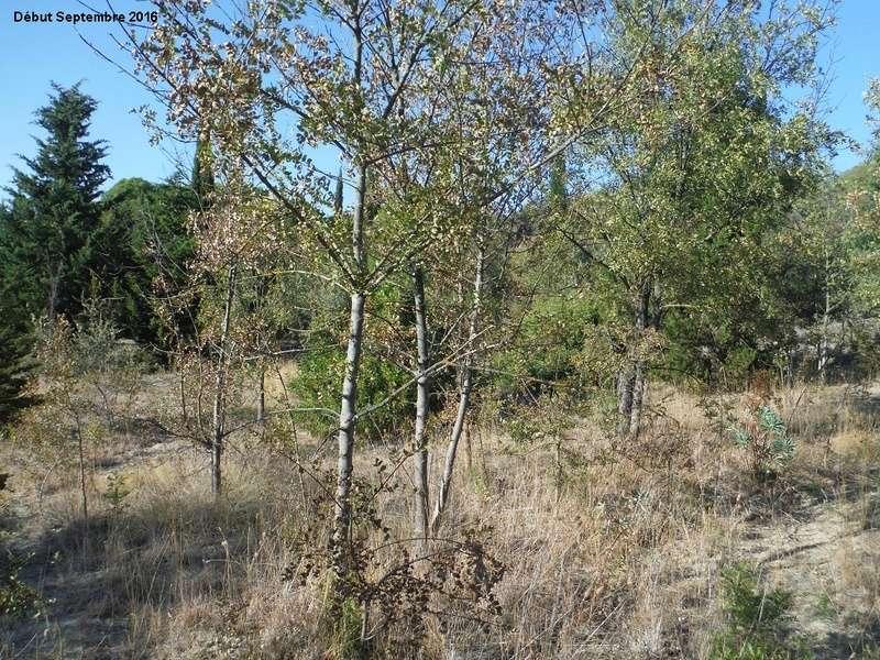JdB de 4 hectares de pâtures dans le SUD : Janvier à la diète... + expérimentation 4001pa10