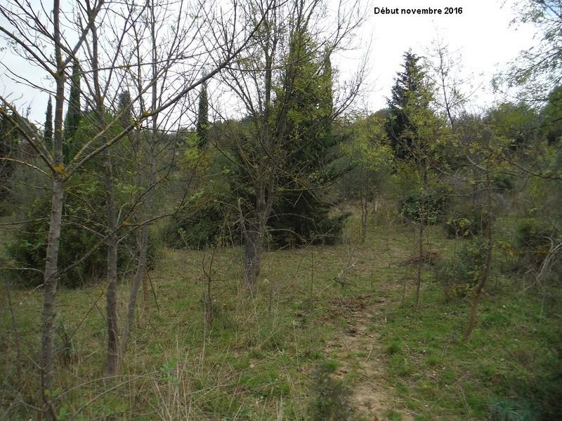 JdB de 4 hectares de pâtures dans le SUD : Janvier à la diète... + expérimentation 4004pa10