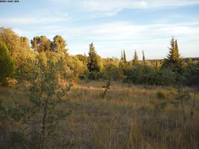 JdB de 4 hectares de pâtures dans le SUD : Timide reprise après 8 mois de sécheresse 5000pa10
