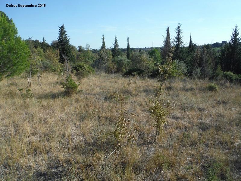 JdB de 4 hectares de pâtures dans le SUD : Janvier à la diète... + expérimentation 5001pa10