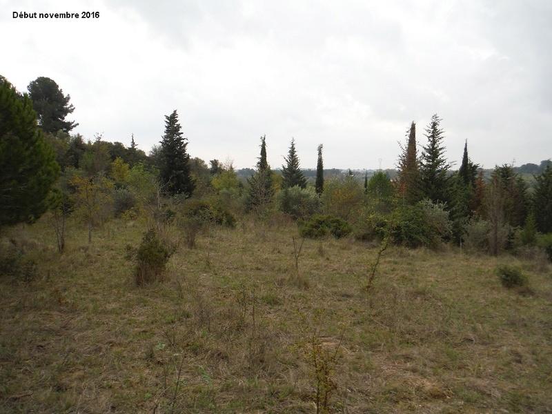 JdB de 4 hectares de pâtures dans le SUD : Janvier à la diète... + expérimentation 5004pa10