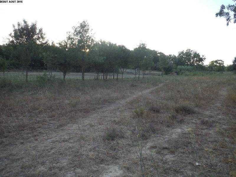 JdB de 4 hectares de pâtures dans le SUD : Timide reprise après 8 mois de sécheresse 6000pa10