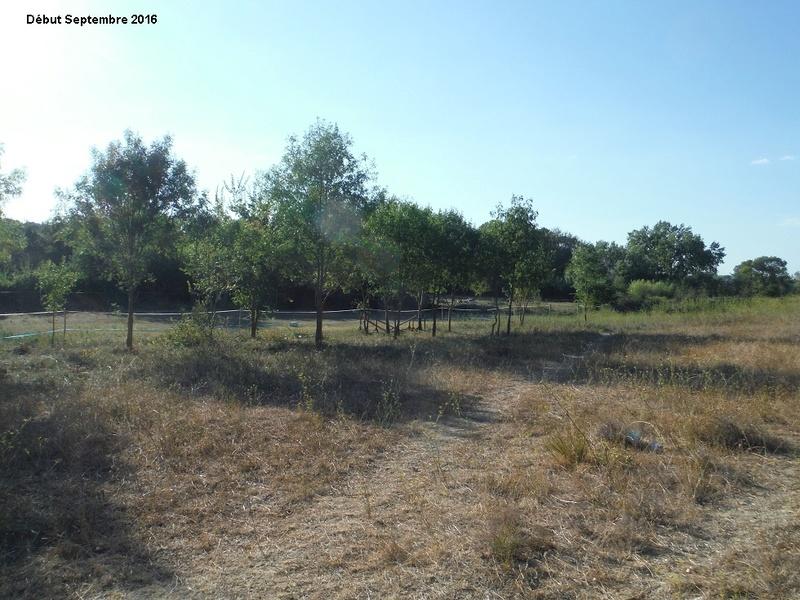 JdB de 4 hectares de pâtures dans le SUD : Janvier à la diète... + expérimentation 6001pa10