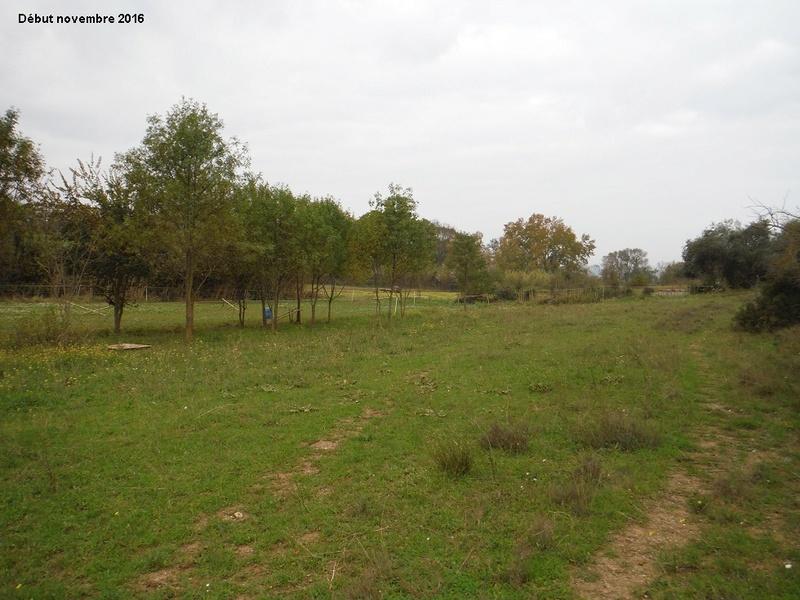 JdB de 4 hectares de pâtures dans le SUD : Janvier à la diète... + expérimentation 6004pa10