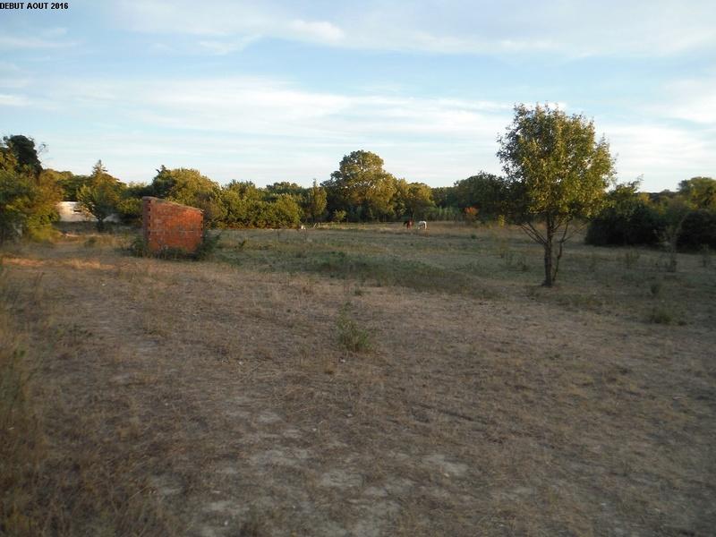 JdB de 4 hectares de pâtures dans le SUD : Janvier à la diète... + expérimentation 7000pa10