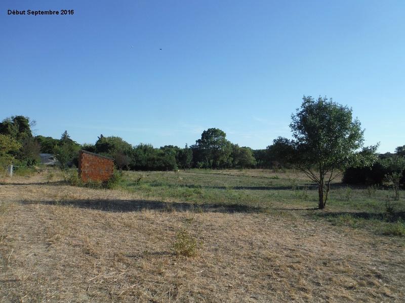 JdB de 4 hectares de pâtures dans le SUD : Janvier à la diète... + expérimentation 7001pa10