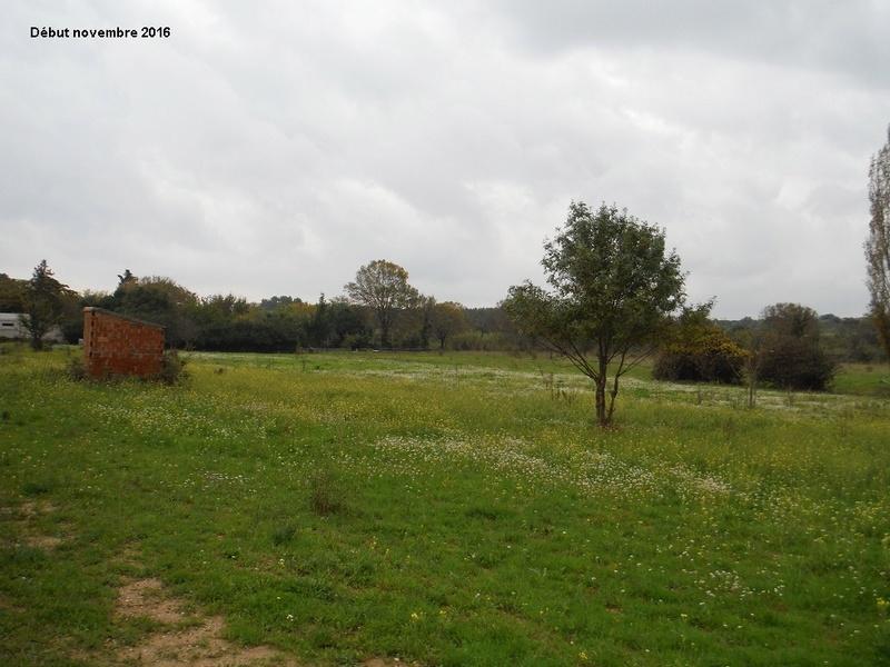 JdB de 4 hectares de pâtures dans le SUD : Janvier à la diète... + expérimentation 7004pa10