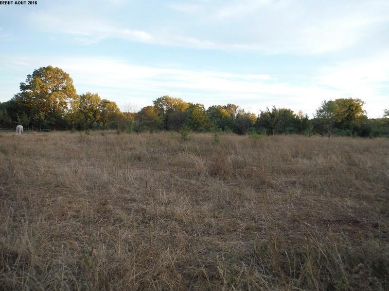 JdB de 4 hectares de pâtures dans le SUD : Janvier à la diète... + expérimentation 8000pa10
