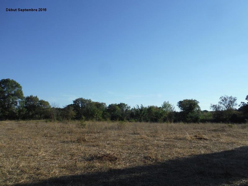 JdB de 4 hectares de pâtures dans le SUD : Janvier à la diète... + expérimentation 8001pa10