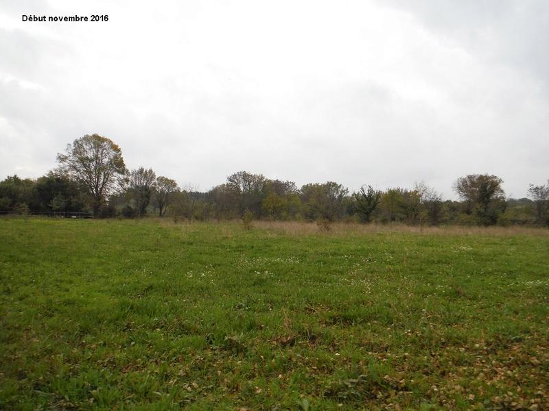 JdB de 4 hectares de pâtures dans le SUD : Janvier à la diète... + expérimentation 8004pa10