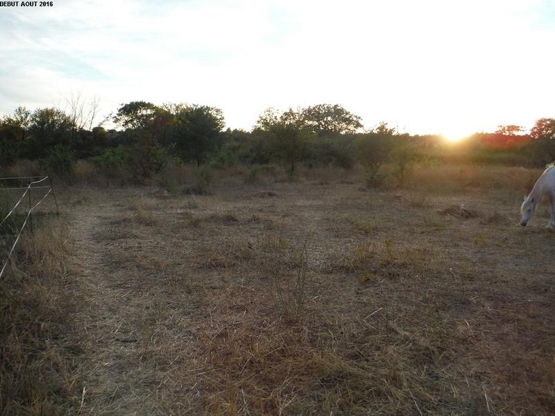 JdB de 4 hectares de pâtures dans le SUD : Timide reprise après 8 mois de sécheresse 9000pa10
