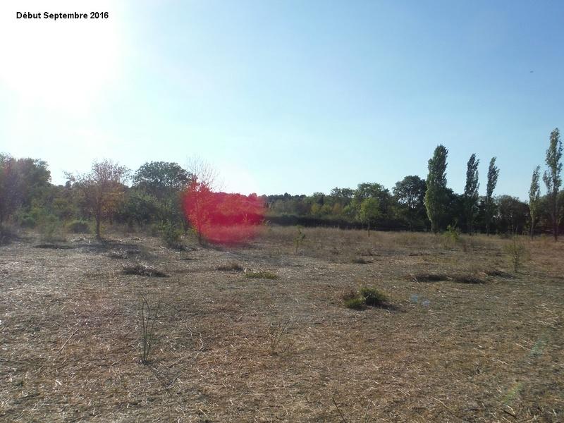 JdB de 4 hectares de pâtures dans le SUD : Janvier à la diète... + expérimentation 9001pa10