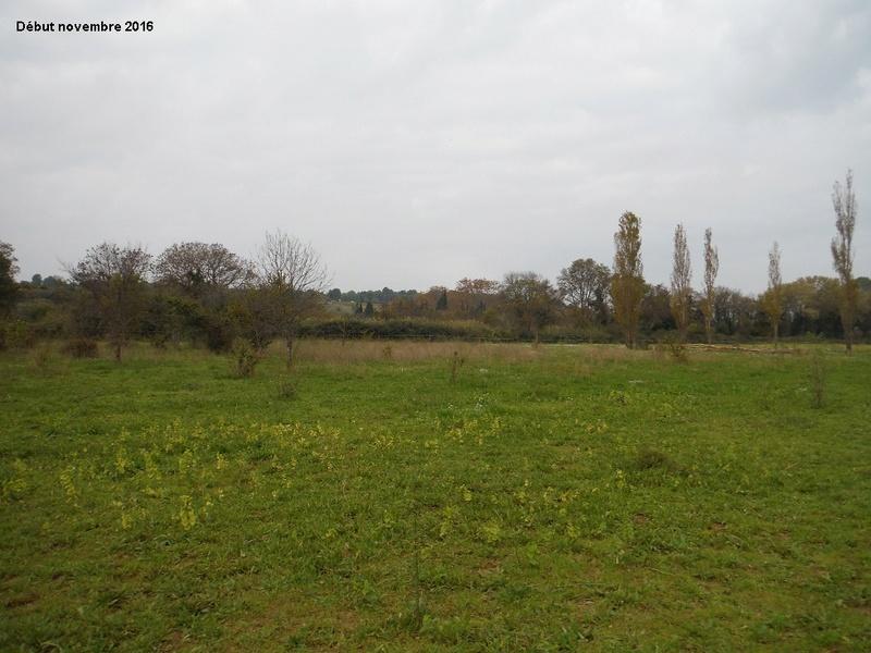 JdB de 4 hectares de pâtures dans le SUD : Janvier à la diète... + expérimentation 9004pa10