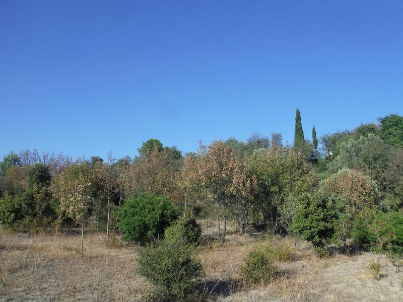 JdB de 4 hectares de pâtures dans le SUD : Timide reprise après 8 mois de sécheresse Arbres10