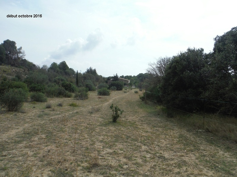 JdB de 4 hectares de pâtures dans le SUD : Janvier à la diète... + expérimentation Dscf4911